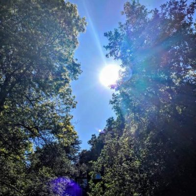 Vitamin D and Nature